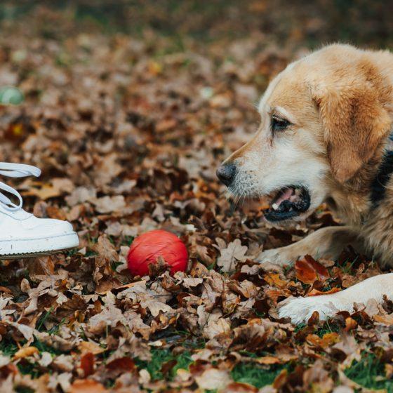 Ein Hund spielt mit dem Ball